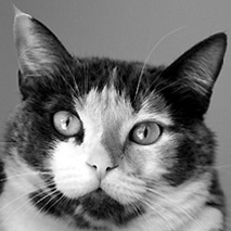 Best Friends—Los Angeles NKLA Pet Adoption Center (West L.A.)