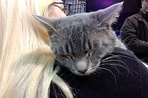 Johnny Depp the cat is now in a loving home