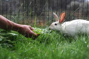 Page the rabbit would approach people who offered her food