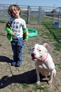Ethan and Daisy the American bulldog mix at the shelter