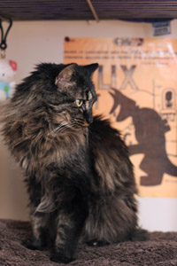 Spunky cat Annabelle the cat proves great things come in small packages