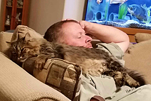Poppy Sue the Maine coon tabby cat snuggling with her person in her new home