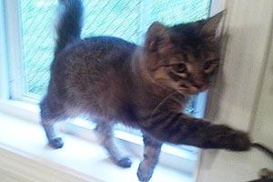 Esther as a kitten