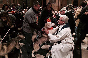 Blessing of the Animals in New York