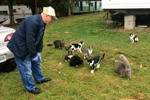 Man handing out Blue Buffalo treats to colony cats