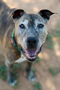 Brewster the senior dog would love a home during Adopt a Senior Pet Month
