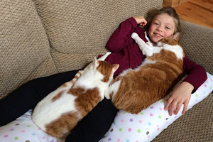 Two lap cats taking a cat nap with a boy