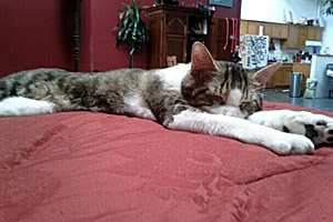 Marble the cat now chills at home