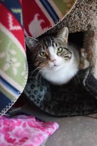 Ludo the three-legged cat learns to love the great indoors