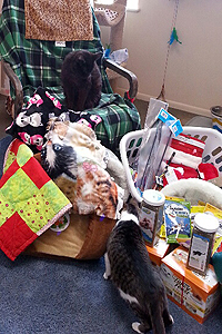 Cooper and Mimi the cats check out the pile of donated gifts