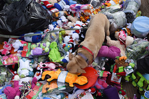 Dog playing with the donated Christmas toys