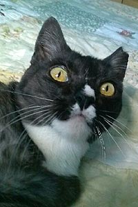 Cricket the chirping cat who got treatment for a cancerous lump on her mammary area