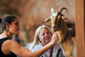 Rescued goat Cupid meeting new human friends
