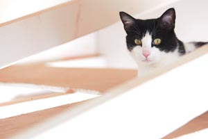 Dutchess the rescued tuxedo cat in the rafters at Best Friends Animal Sanctuary
