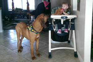 Ellie May the bloodhound and Caidence the baby are BFFs