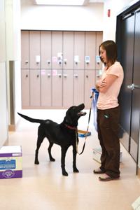Eni the drug-sniffing dog doing nose work