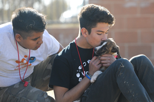 Boys making new friends with puppies