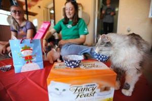 FeLV-positive cat Puffin enjoys a birthday treat