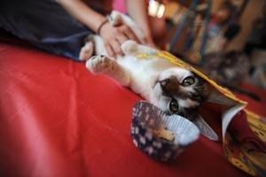 Lewie, an FeLV-positive cat, enjoys some birthday fun