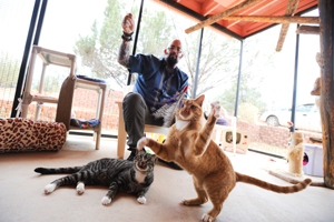Bo and Barney playing with Jackson Galaxy