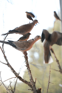 Birds perching in the flight aviary at Best Friends Animal Sanctuary