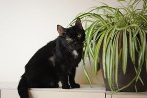 Fran, the FIV-positive senior cat
