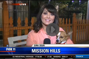Click here to see more of Heidi the Jack Russell terrier mix and Gina Silva