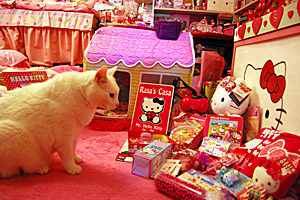 Rasa the cat with FeLV adopted from Best Friends Animal Sanctuary in his Hello Kitty room