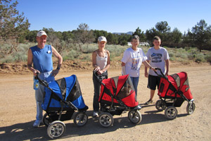 Group of cats in strollers with volunteers at Best Friends Animal Sanctuary