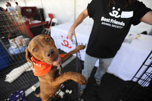 St. George Pet Super Adoption, fun for everyone