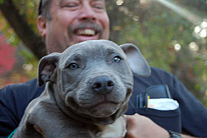 Blueberry the dog who was rescued from dog fighting