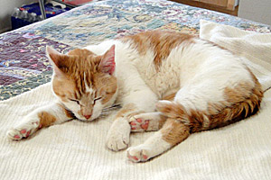 Caroline the cat has the distinction of going on the 2,500th sleepover