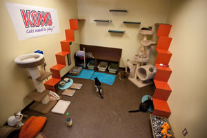 Free-roaming cat room with a cat tree, stairs, and feline wall perches at the animal shelter