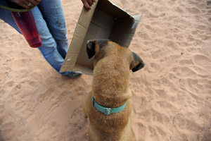 Chester the dog sees the box