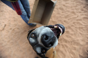 Chester the dog loves boxes