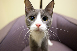 Cucumber is one of the many adoptable cats