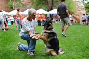 Volunteer at Best Friends Dan Lichtenstein with a German shepherd at Strut Your Mutt in Kanab