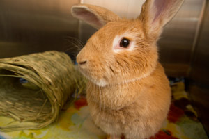 Edna the rabbit