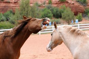 Horses Cassia and Helen