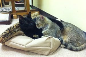 Best Friends Animal Society Henri and Simba