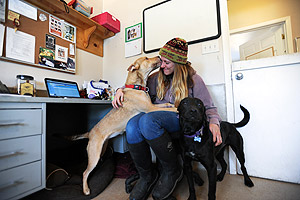 Cassie and Ren, Lab dog and cattle dog, spend office time with Jennifer