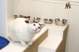 Cat at the No-Kill Los Angeles (NKLA) Pet Adoption Center