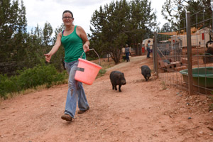 Pig feeding system at Piggy Paradise at Best Friends