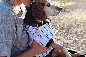 Pushkin the beagle inspired Sharon's animal advocacy
