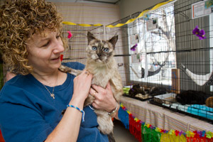 Senior Siamese cat with her adopter at the Salt Lake County Animal Services adoption event