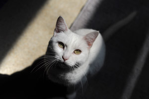 Snowflake came from Stray Cat Alliance part of NKLA
