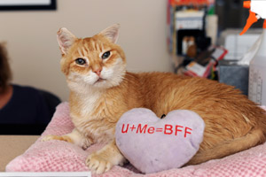 Sunny the cat at Best Friends Animal Sanctuary in Cat World