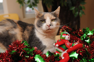 Cat World celebrates the holidays