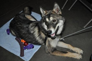 Canine attendee at Best Friends' Sherry Woodard's Animal Behavior Workshop