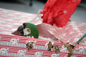 Parrot Garden celebrates the holidays